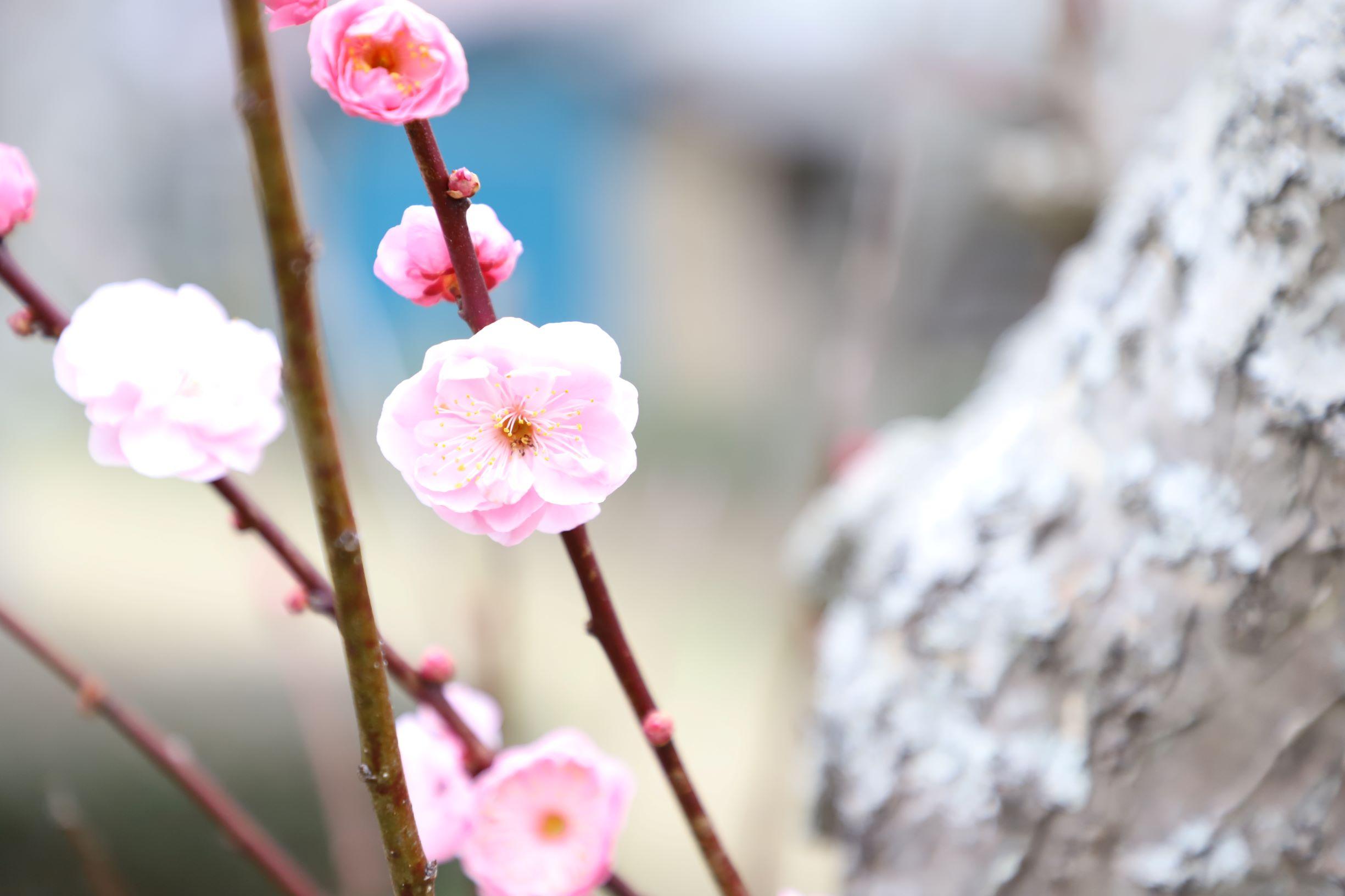 春はすぐそこまで・・・🌺イメージ