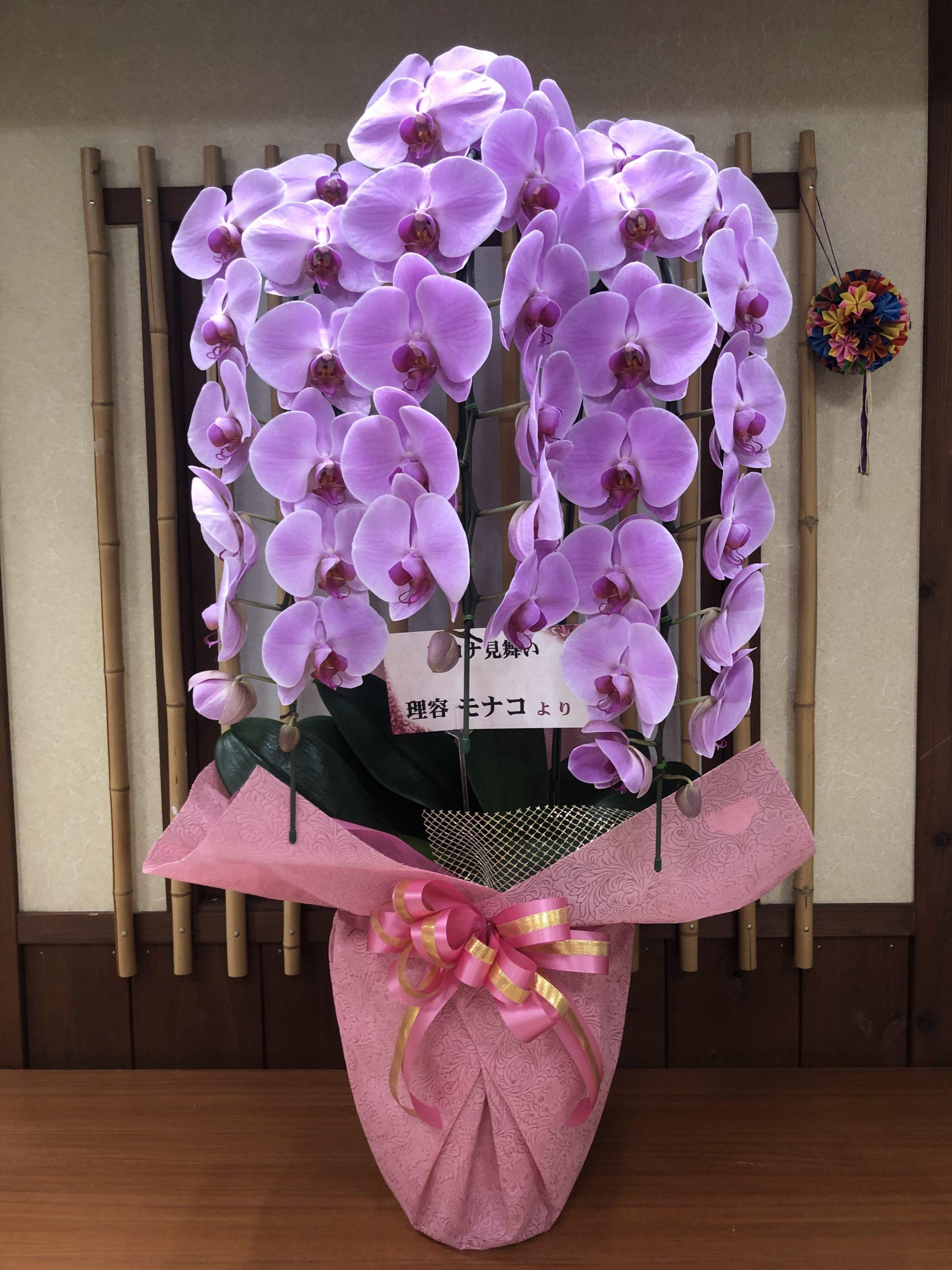 ステキな胡蝶蘭イメージ