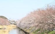お花見のシーズンイメージ
