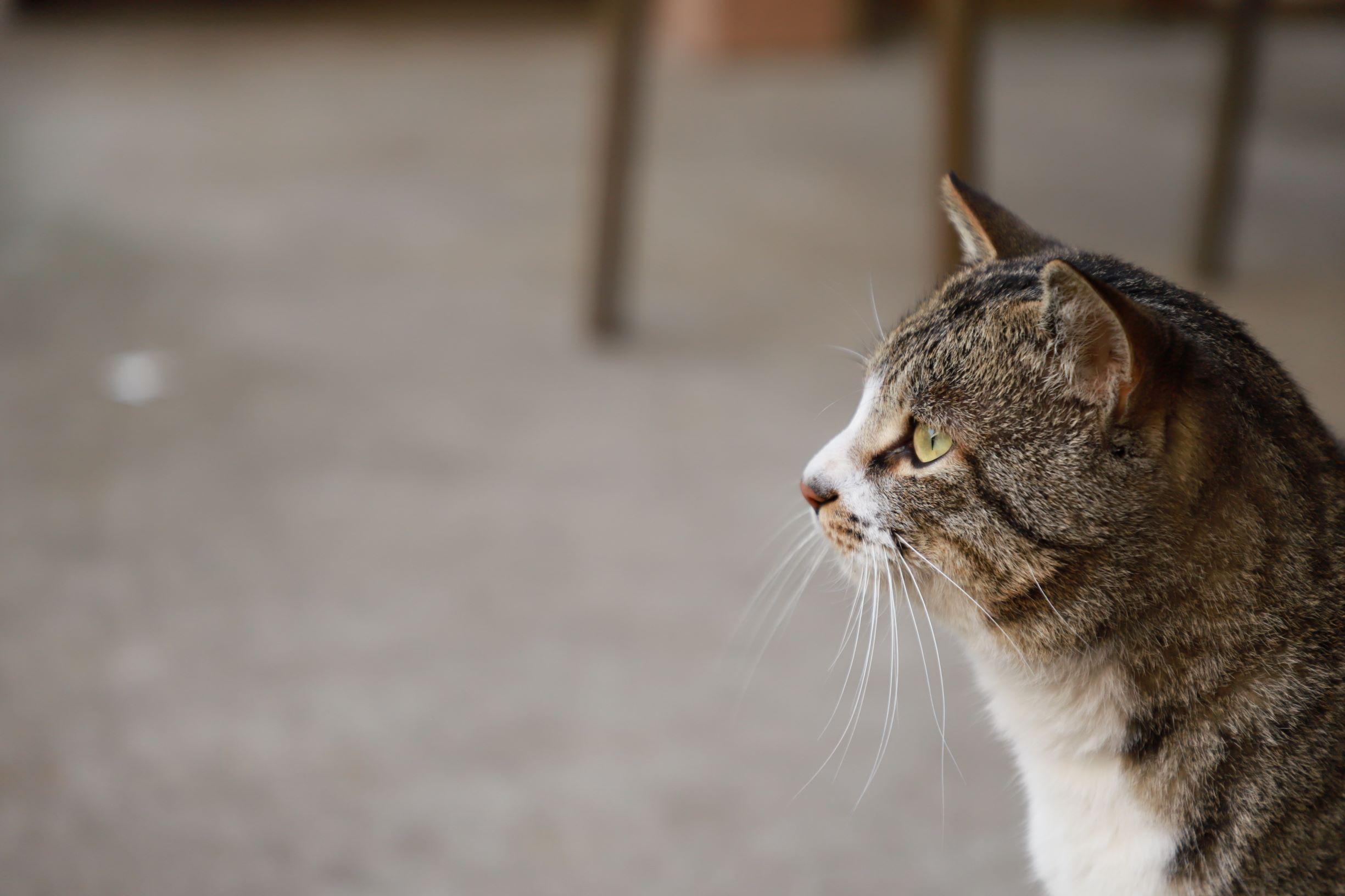 ネコ課の課長(=^・^=)イメージ