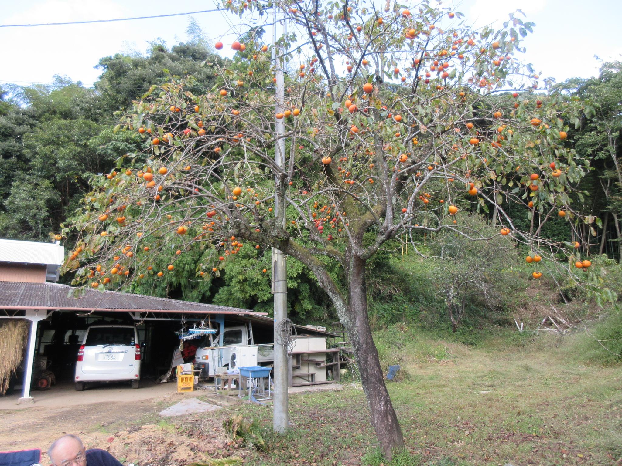 新米試食会🍙秋の収穫祭🍠🍁イメージ